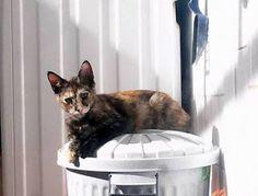 Cristicats, salvando gatos!!!: Holly