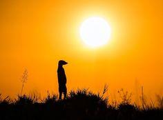 "⚡️ ""LOS MOMENTOS FAVORITOS DE @HACERFOTOS (2/5/2017)"" https://twitter.com/i/moments/859265901312585728  (Suricata al atardecer, #fotografia de Will Burrard-Lucas)"