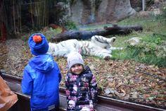 Children and tiger Garden Sculpture, Children, Outdoor Decor, Zoology, Italia, Rome, Young Children, Boys, Child