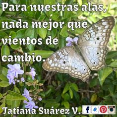 #VientosDeCambio #Armonía #Bienestar #AquíyAhora #PoderPersonal #Alegría #Amor  #Reiki #Consciencia #Medellín #Ekánta #Espiritualidad #TatianaSuárezV
