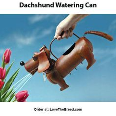 """Acquire fantastic tips on """"Dachshund dogs"""". They are readily available for you on our site. Dachshund Breed, Dachshund Funny, Long Haired Dachshund, Dachshund Love, Dachshund Gifts, Dachshund Quotes, Positive Dog Training, Training Your Puppy, Animals"""