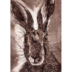 'Hare Again' by Printmaker Caroline Barker. Blank Art Cards By Green Pebble. www.greenpebble.co.uk