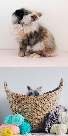 Meet Bun Jovi - the coolest bunny in the whole world. @FallForDIY