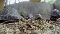 Our Seychelles volunteers recently got featured in a segment on conservation. Watch the video to find out how we are helping Curieuse Island's endemic flora and fauna! Volunteer Abroad, Wildlife Conservation, Flora And Fauna, Volunteers, Seychelles, Africa, Watch, Country, News