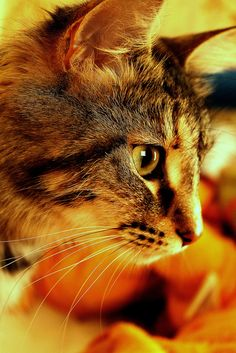 this is my lil girl  nala by mardyeas, via Flickr