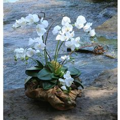 Distinctive Designs International 9159 Silk Cream White Phalaenopsis Orchid Garden With Driftwood Nestled In A Rustic Wood Basin Orchid Flower Arrangements, Orchid Planters, Artificial Floral Arrangements, Orchid Centerpieces, Artificial Orchids, Orchid Vase, Driftwood Centerpiece, Driftwood Planters, Indoor Orchids