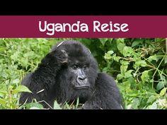 Dian Fossey: Begraben bei den Berggorillas | traveLink.