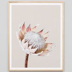 Another one of our stunning new pieces of art up close! Protea - all framed and ready to hang in store now! Canvas Frame, Canvas Wall Art, Framed Art, Framed Prints, King Protea, Gifted Kids, Pink Tone, Home Gifts, Kids Fashion