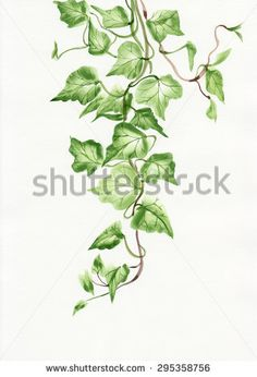 stock-photo-watercolor-painting-of-green-ivy-branches-and-leaves-isolated-on-white-295358756.jpg (320×470)