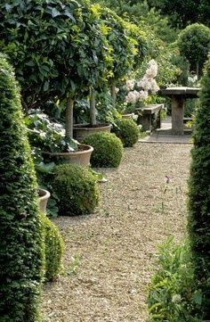 Garden Designs Ideas 2018 : Bunny Guiness Garden Design Potted trees and boxwood.
