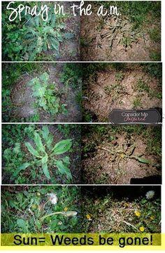How To Kill Weeds In Garden