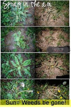 how to kill weeds permanently