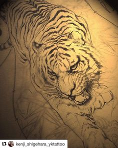 303 Best Tiger Tattoo Design Images Tiger Tattoo Tiger Tattoo Images, Photos, Reviews