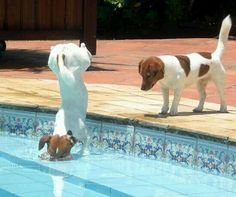 In the pool JRT