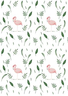 Exciting things will be happening with these flamingos in the coming months!