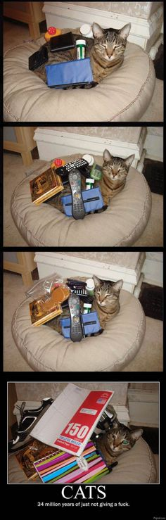 Cats: 34 million years of just not giving an f.
