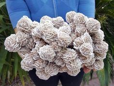 ∆ Desert Rose Selenite... Desert Rose crystals, Chihuahua, Mexico. Credit: CrystalMiner