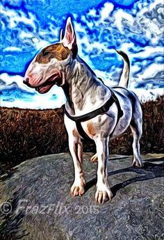 #Bull #Terrier Artwork English Bull Terriers, Bull Terrier Dog, Best Dog Breeds, Best Dogs, Bully Dog, Happy Art, Life Is Good, Horses, Bullies