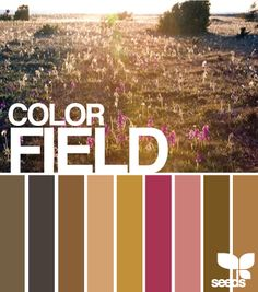Design Seeds: color field 11.13.11