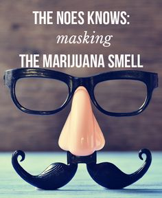 The Nose Knows: Masking the Marijuana Smell - MassRoots Cannabis News, Medical Cannabis, Marijuana Facts, Smoke Smell, Weed Humor, Up In Smoke, Shops, Smoking Weed, Online Shopping