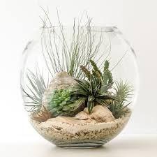 Resultado de imagen para terrarium
