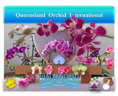 Phalaenopsis: Novice's Orchid, Mother's Day Gift and woodlandgnome's House Plant ✾💃🎁🏡 Growing Orchids, House Plants, Mother Day Gifts, Foliage Plants, Houseplants, Container Plants