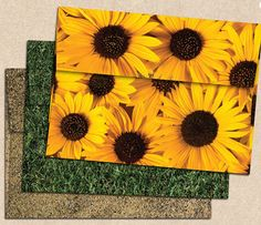 1000Qty Casual Correspondence and much more! | Perfect for Personal Stationery Invitation Suite Inserts A6 Flat Card - Sunflower EX4030-12-1M 4 5//8 x 6 1//4