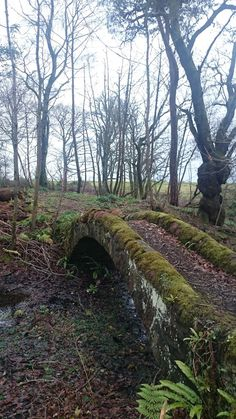Old Bridge at Kilmahew castle in Cardross Scotland [5761024].