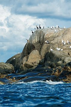 Island, islets, and rock outcroppings dot Sweden's west coast, including the wildlife-rich Koster Islands. (Photograph by Christian Åslund)