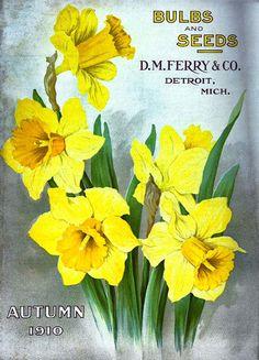 C. M. Ferry & Co. 1910 autumn catalog cover