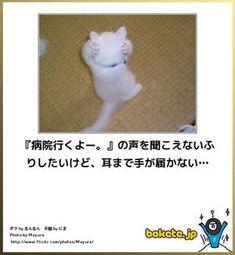 画像 Kittens, Cats, Animals And Pets, Funny Memes, Humor, Comic, Unique, Cute Kittens, Pets