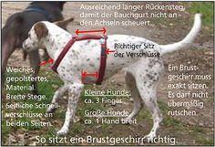 Easy Dogs / Mensch, zieh doch nicht so! (Teil 1), Claudia Matten, Fataler Leinenruck in der Hundeerziehung