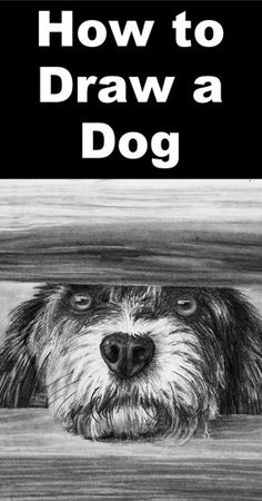 Learn how to draw a cute dog at the gate in the pencil drawing lesson from the Paint basket