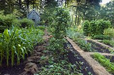 North Hill vegetable garden, Vermont