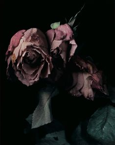 ❈ Fleurs Foncées ❈ dark art photography flowers & botanical prints by David Sims David Sims, Deco Rose, Flower Bomb, Losing A Dog, Dried Flowers, Dark Flowers, Wilted Flowers, Flowers Pics, Botany