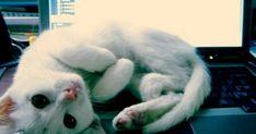 Quand on a un chat, c'est qu'on est forcément un « cat lover ». Nos boules de poils sont précieuses à nos yeux et on ne se lasse jamais de leur présence. Mais il est nécessaire parfois de se demander si ...