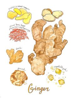 An illustration of ginger and its various preparations: pickled in sweet vinegar, dried, ground, crystallized and sliced beni shoga, when ginger is preserved first in salt and then vinegar. The print is a 9x12 digital reproduction of an original watercolor + pen and ink illustration. It is printed on 100lb EcoSilk Archival Paper with soy-based inks and individually signed by the artist. It ships flat with white acid-free board in a plastic sleeve and arrives frame-ready. Check out all th...