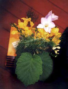 http://www.annafox.co.uk/files/gimgs/38_foodflowers56.jpg