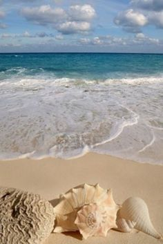 ✿ Beach treasures!!! Bebe'!!! Beautiful Sea Shells!!!