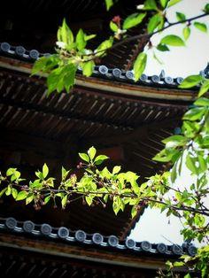 仁和寺:五重塔