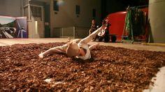 [måde] MORPH [maschine] - Performance on Vimeo Ballet Shoes, Dance Shoes, Fashion, Ballet Flats, Dancing Shoes, Moda, Fashion Styles, Ballet Heels, Fashion Illustrations