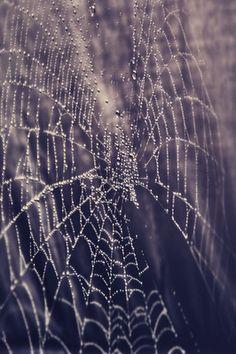 Spider Web Photography Settings Nature Landscape King Ecommerce