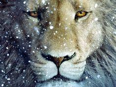 Aslan in snow