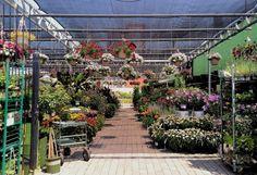 Garden World Nyc Center Nursery Supply