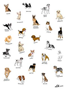Art Print by lilichin-Dog breeds! Art Print by lilichin Dog breeds! Cute Animal Drawings, Cute Drawings, Dog Drawings, Cute Baby Animals, Animals And Pets, Cute Puppies, Cute Dogs, Dog Illustration, Illustrations