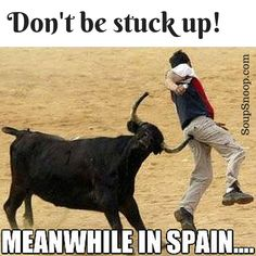So don't be a stuck up! Meanwhile in Spain the poor people can't help it Stuck Up, Spain, Horses, Humor, Animaux, Sevilla Spain, Humour, Funny Photos, Funny Humor