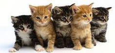 Risultati immagini per gattini teneri