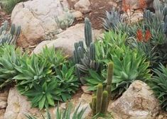 Rocks and succulents.