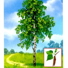 breza School Frame, Autumn Nature, Elementary Science, Garden Trees, Nature Crafts, Autumn Theme, Montessori, Card Games, Clip Art