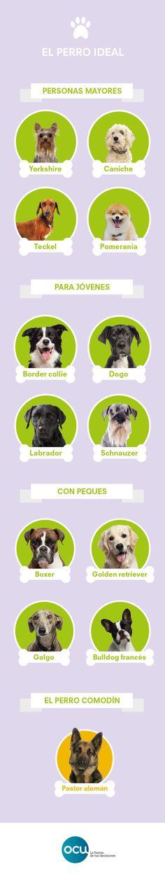 El mejor amigo del perro   OCU Consumity